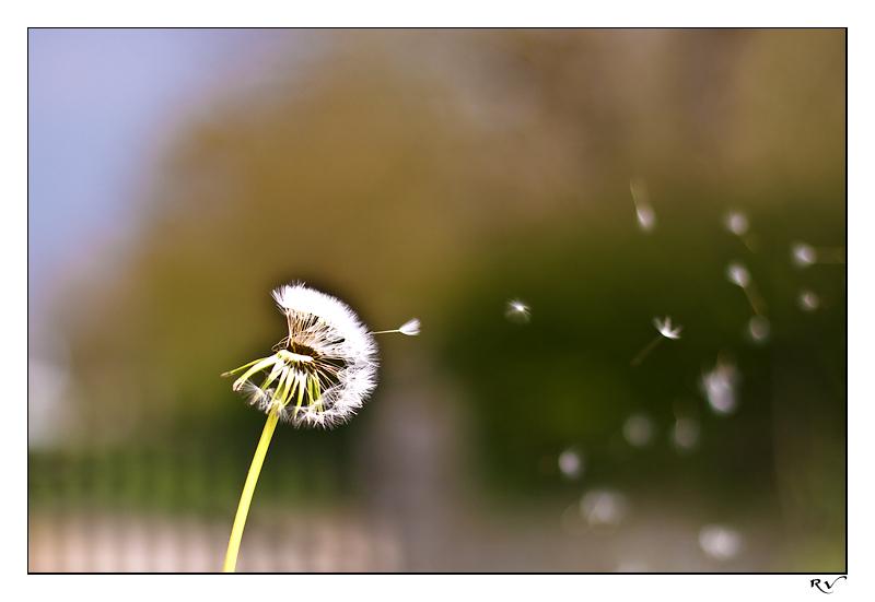 20090422191215_printemps2